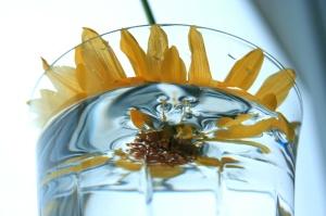 flower-distortion-103816059
