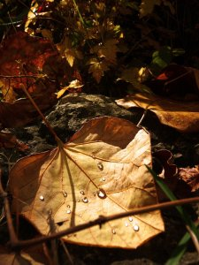 heart_of_autumn_by_soulofnovember-d33j6d1