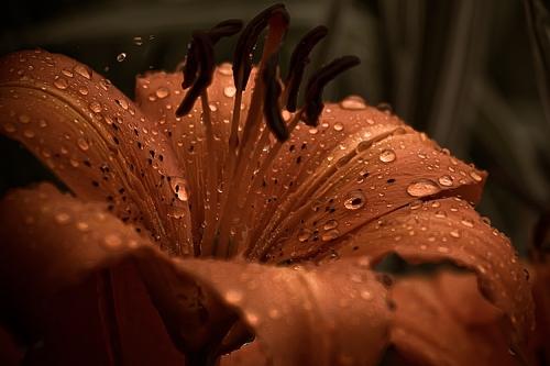A_Little_Rain_Bouncing_by_Bonavista_Tim